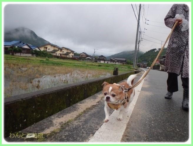f:id:yasukazu01:20160525203845j:image