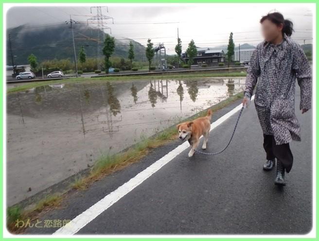 f:id:yasukazu01:20160525204119j:image
