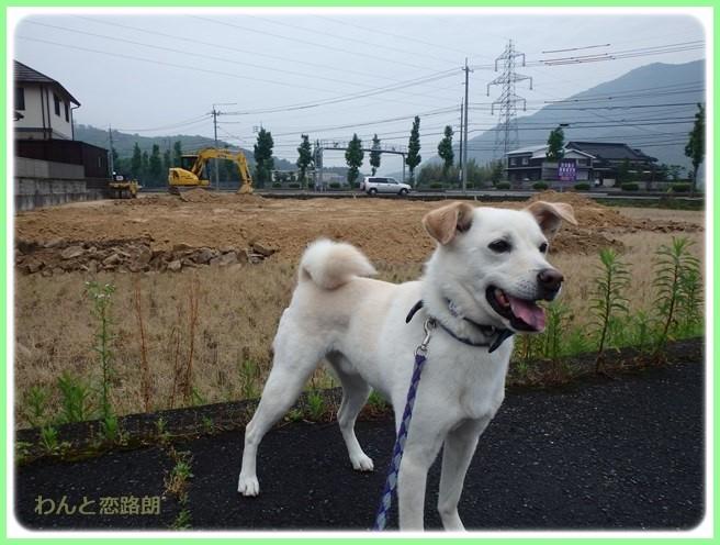 f:id:yasukazu01:20160528190242j:image