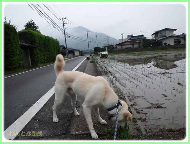 f:id:yasukazu01:20160528194959j:image