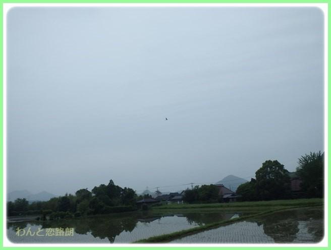 f:id:yasukazu01:20160528195313j:image
