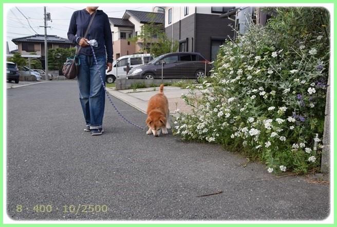 f:id:yasukazu01:20160528201300j:image