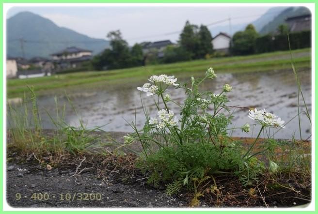 f:id:yasukazu01:20160528201449j:image