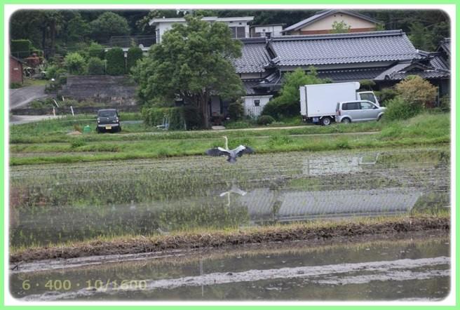 f:id:yasukazu01:20160601212226j:image