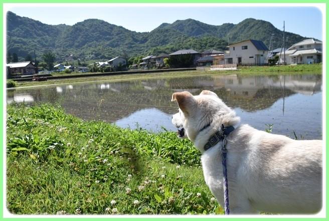 f:id:yasukazu01:20160602202421j:image