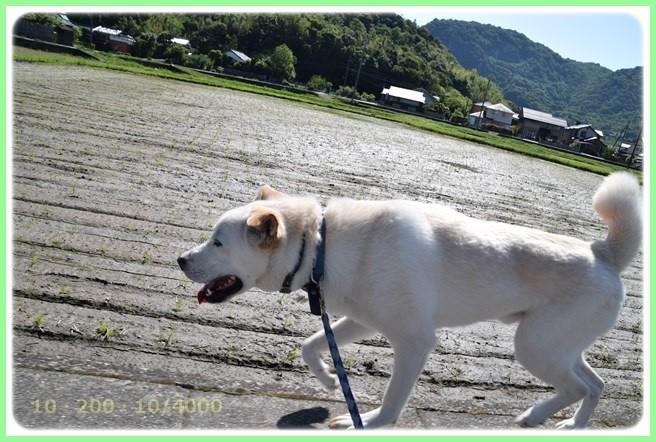 f:id:yasukazu01:20160602202724j:image