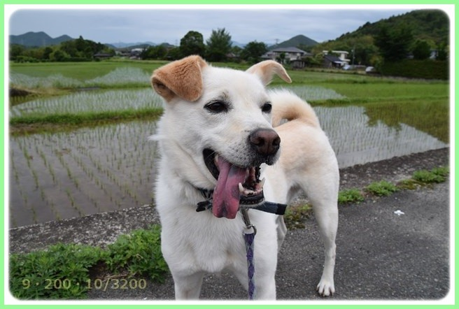f:id:yasukazu01:20160606201629j:image