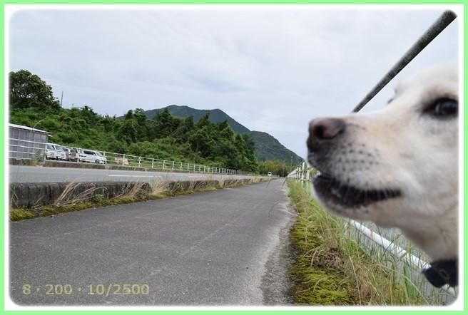 f:id:yasukazu01:20160606202018j:image