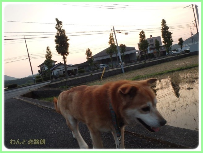 f:id:yasukazu01:20160607205216j:image