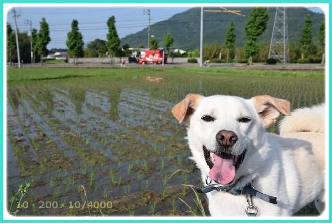 f:id:yasukazu01:20160610210640j:image