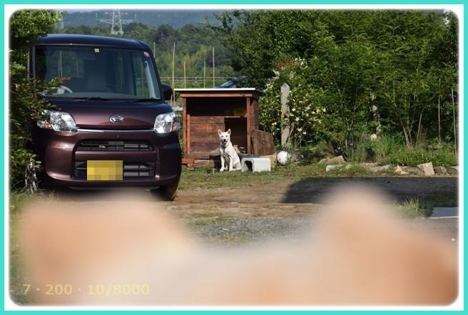 f:id:yasukazu01:20160610211451j:image