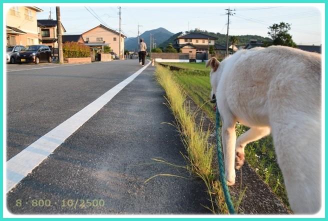 f:id:yasukazu01:20160610212608j:image