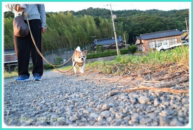 f:id:yasukazu01:20160610212726j:image