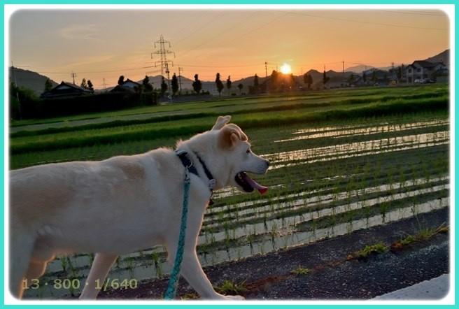 f:id:yasukazu01:20160610213225j:image