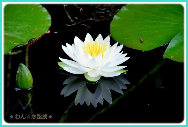 f:id:yasukazu01:20160616211234j:image