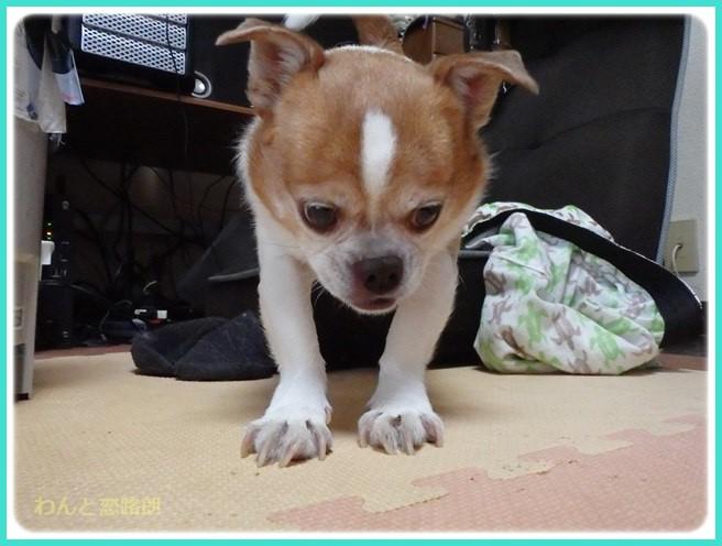 f:id:yasukazu01:20160616214844j:image