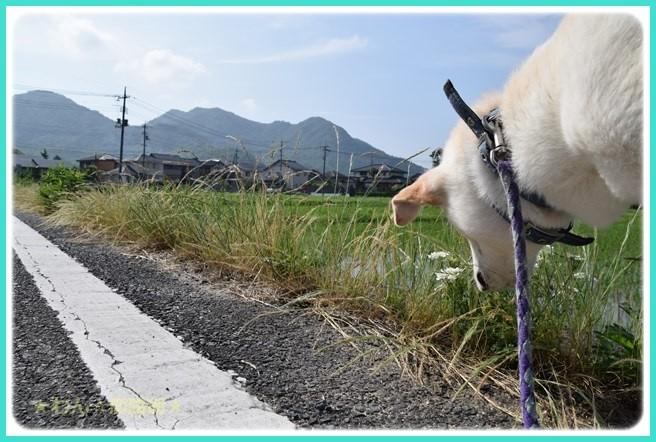 f:id:yasukazu01:20160618201930j:image