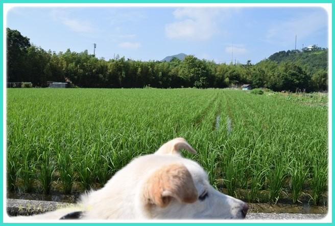 f:id:yasukazu01:20160618202344j:image