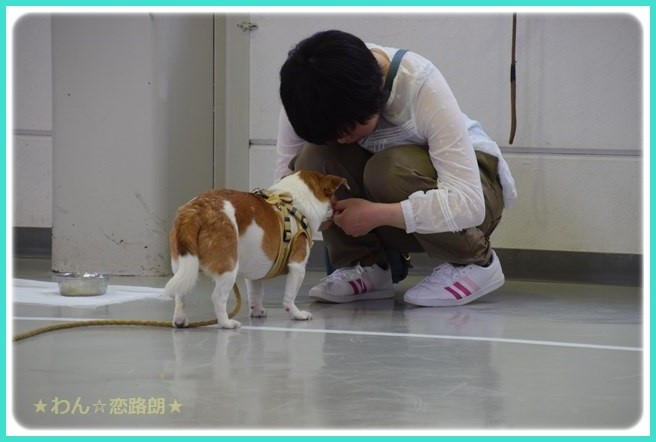 f:id:yasukazu01:20160618203221j:image