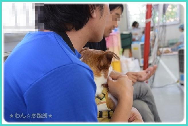 f:id:yasukazu01:20160618204220j:image