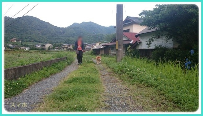 f:id:yasukazu01:20160619211350j:image