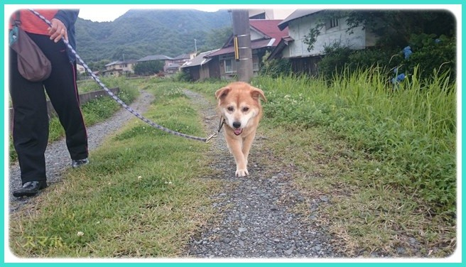 f:id:yasukazu01:20160619211525j:image
