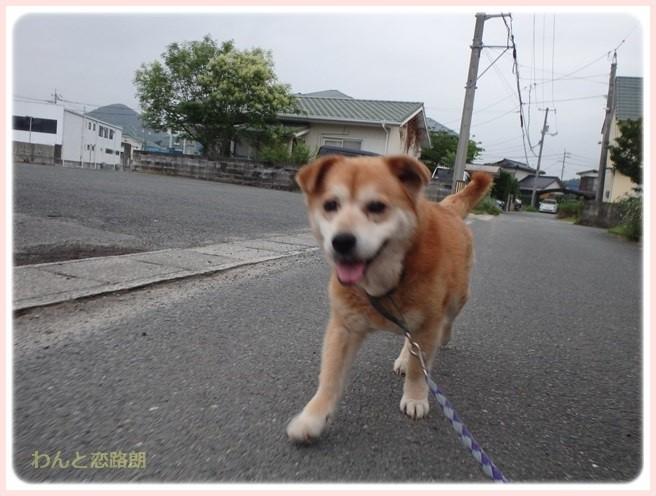 f:id:yasukazu01:20160624210435j:image