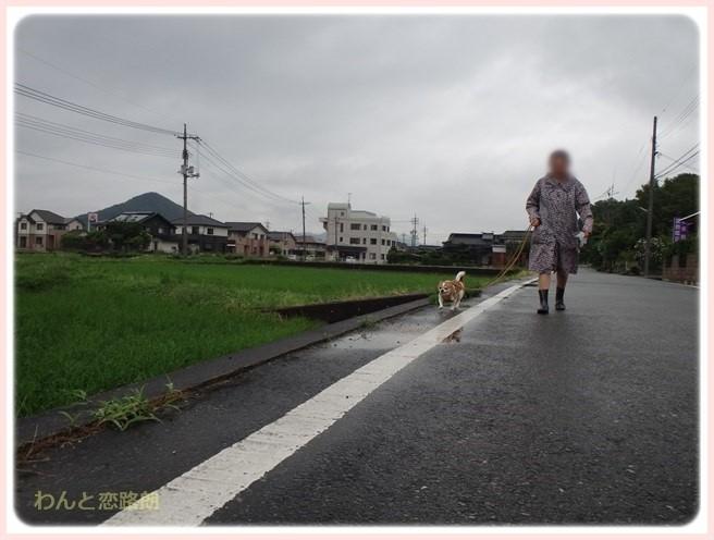 f:id:yasukazu01:20160629203935j:image