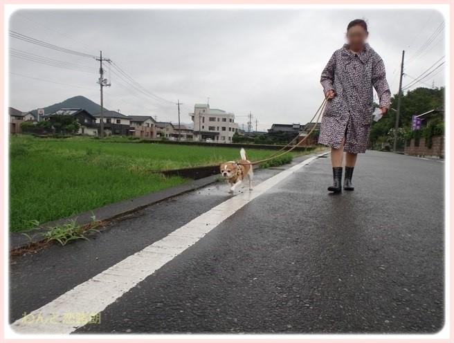 f:id:yasukazu01:20160629204015j:image