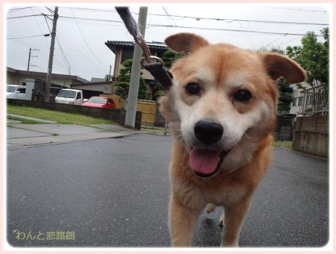 f:id:yasukazu01:20160629204636j:image