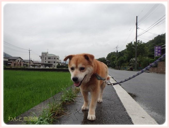 f:id:yasukazu01:20160629204831j:image