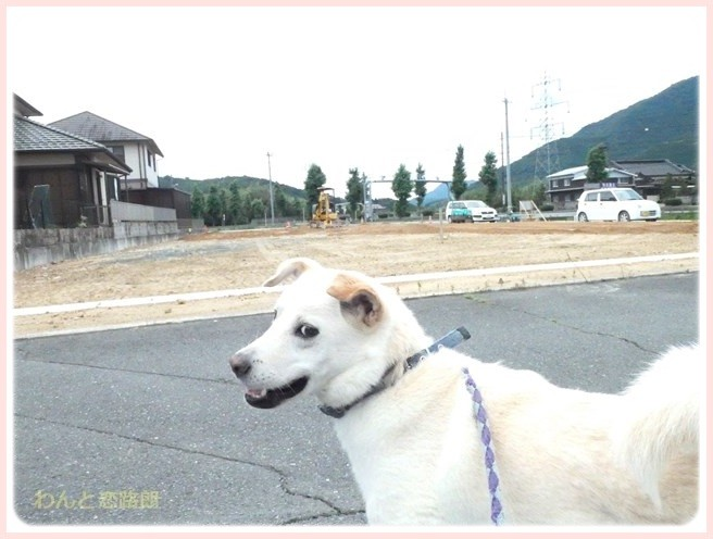 f:id:yasukazu01:20160704201844j:image