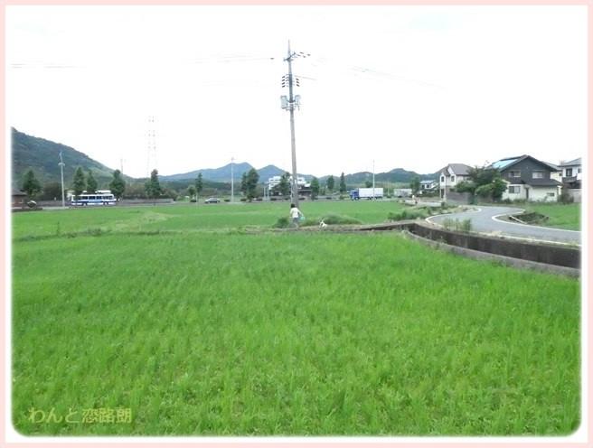 f:id:yasukazu01:20160704201949j:image