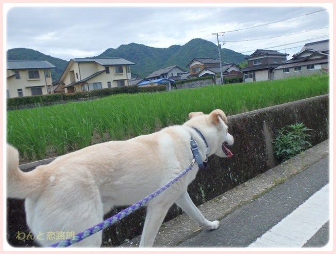 f:id:yasukazu01:20160704202239j:image
