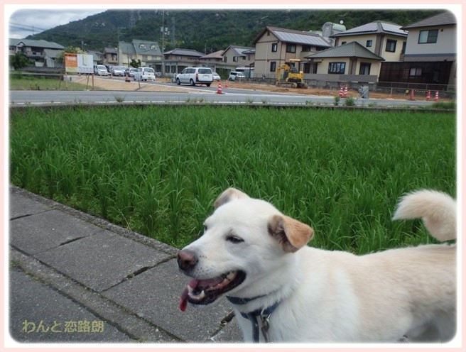 f:id:yasukazu01:20160704202410j:image