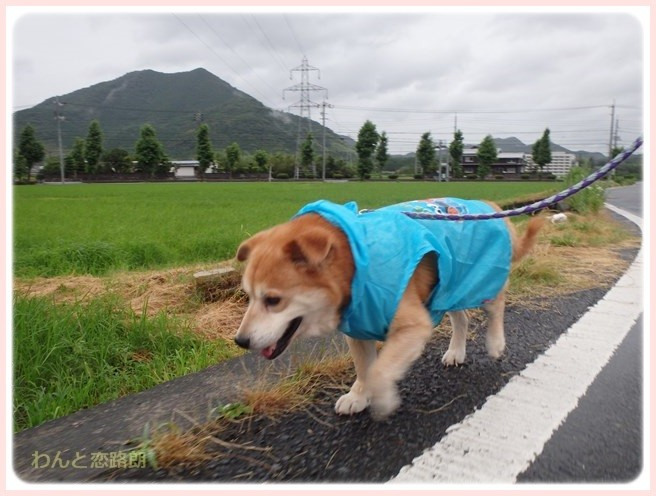 f:id:yasukazu01:20160708204448j:image