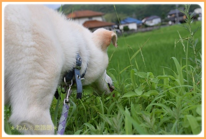 f:id:yasukazu01:20160715204321j:image