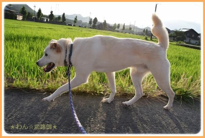 f:id:yasukazu01:20160715204756j:image