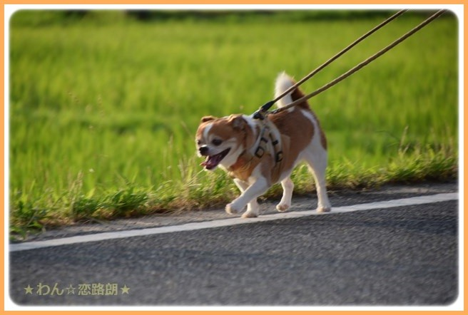 f:id:yasukazu01:20160715204945j:image