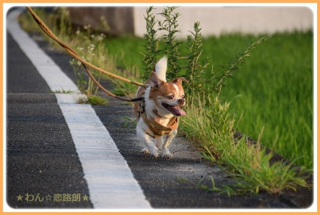 f:id:yasukazu01:20160715205514j:image