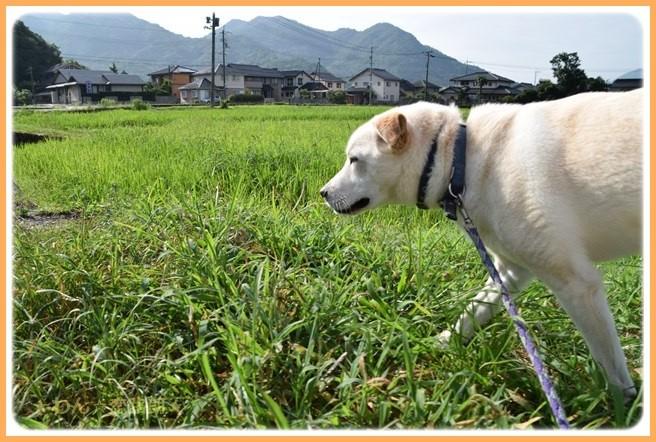f:id:yasukazu01:20160720204956j:image