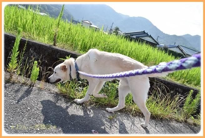 f:id:yasukazu01:20160720205203j:image