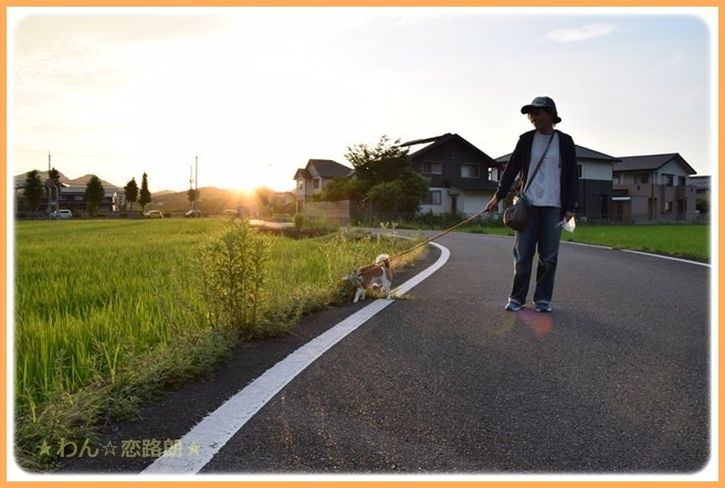 f:id:yasukazu01:20160720210843j:image