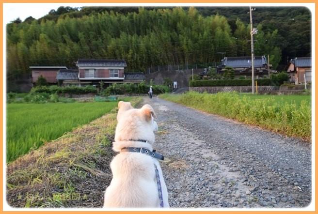 f:id:yasukazu01:20160720211227j:image