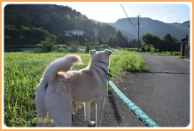 f:id:yasukazu01:20160722203131j:image