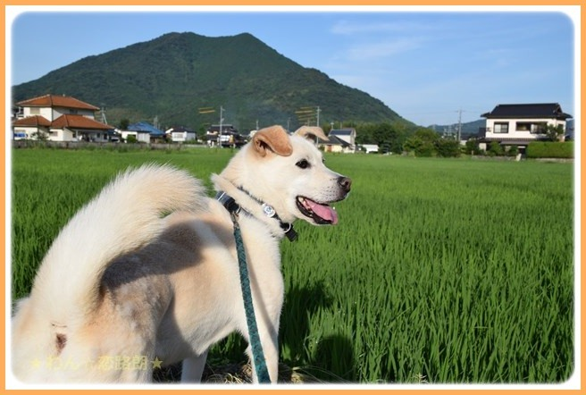 f:id:yasukazu01:20160722203437j:image