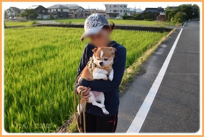 f:id:yasukazu01:20160722205828j:image