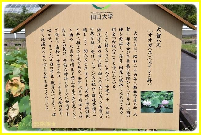 f:id:yasukazu01:20160729220508j:image