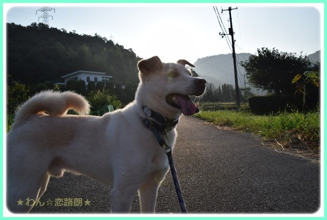 f:id:yasukazu01:20160806203843j:image