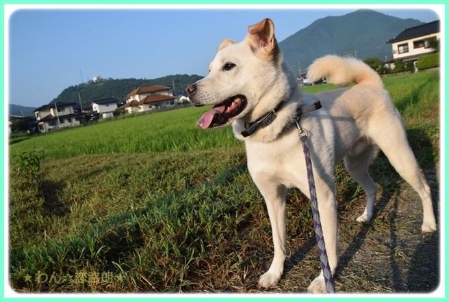 f:id:yasukazu01:20160806203939j:image